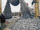 В Краснодаре – массовая гибель рыбы. 26022.jpeg
