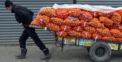 Грузинские мандарины выходят из тени. 29080.jpeg