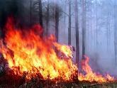 Около дома Иванишвили горел лес. 23166.jpeg