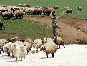 Езиды Армении не хотят учиться, а хотят жениться. 27376.jpeg