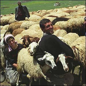 Езиды Армении не хотят учиться, а хотят жениться. 27377.jpeg