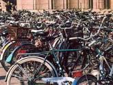 """""""Батуми-вело"""" – пока только для местных. 21445.jpeg"""