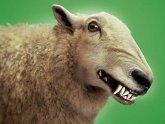 Грузия в овечьей шкуре. 25451.jpeg