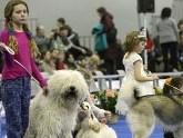 Ереван готовится к международной выставке собак. 24455.jpeg