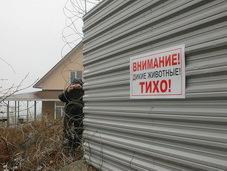 Скотина за забором Ткачева. 27465.jpeg