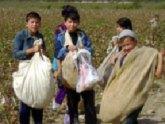 Омбудсмен: В Азербайджане не используют детский труд. 24515.jpeg