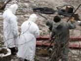 В Сакартвело – новая жертва сибирской язвы. 23562.jpeg