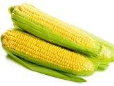 В Грузии наращивают посев чудо-кукурузы. 22637.jpeg