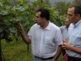 Саакашвили обсудил перспективы виноделия в Кахети. 22695.jpeg
