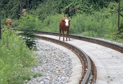 Тбилиси-Москва: железная дорога, которой не будет. 28708.jpeg