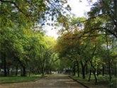 Тбилисские скверы будут под видеонаблюдением. 21712.jpeg