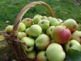 Сакартвело надеется на урожайный год. 21746.jpeg