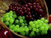 Минсельхоз Грузии: Винзаводы заплатят за виноград 40 тетри. 20933.jpeg