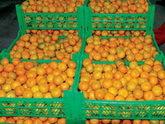 Ajaria losing tangerine paradise