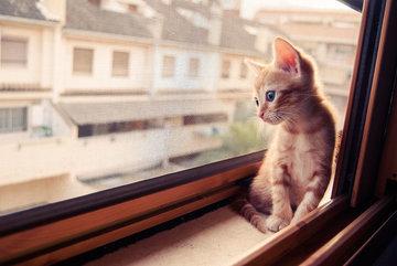 Один дома. Можно ли оставить кошку без присмотра