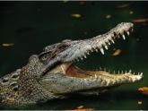 Крокодил  съест грузинских наркоманов