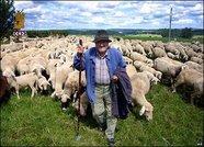 Приезжает корреспондент в горный аул и спрашивает у пастуха...