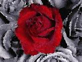 Революция роз: испытание временем