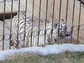 Животная жестокость посреди Тбилиси