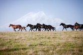 Удивительные лошади Северного Кавказа