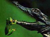Отольются Зугдиди крокодиловы слезы
