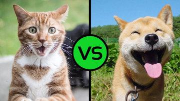 Собака или кошка? Ученые утверждают, что выбор предопределен
