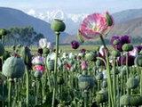 Грузинские тропы афганских наркотиков