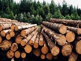 За дрова - заплатят