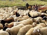 Пастушье рабство в Дагестане