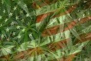 Оправдание марихуаны. Она поборет лихорадку Эбола