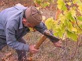 საქართველოს ღვინის მდინარეები  ნაკადულებად მცირდებიან