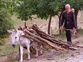 Прифронтовые  села вооружили дровами