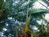 Смерть от мороза под ростовской пальмой