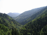 Is the Georgian government going to take the knock on forests?
