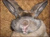 Саакашвили плодит кроликов