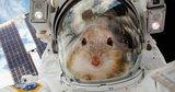 Зачем в космос отправляют пиво, сперматозоиды и мышей