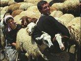Езиды Армении не хотят учиться, а хотят жениться