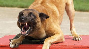 Научно доказано, что собаки кусают тех, кто их боится